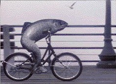 a_fish_needs_a_bicycle.jpg